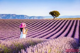 Woman in the lavender, Provence, France