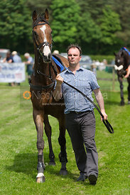 Race 2 Intermediate - Meynell and South Staffs Point to Point 2014