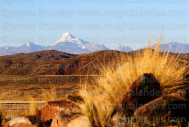 Ichu grass clump (Jarava ichu) and Mt Huayna Potosi, Cordillera Real, Bolivia