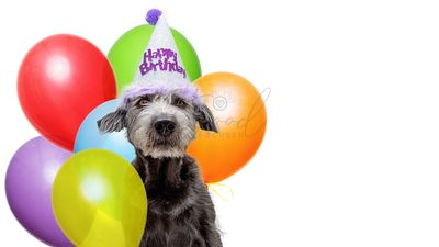 Birthday Dog With Balloons Web Banner