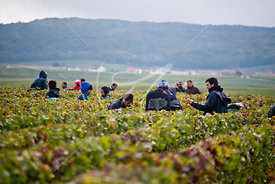 Lassalle-vendanges13_MKB8446