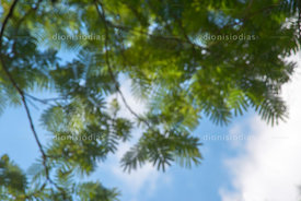Blurred tree foliage