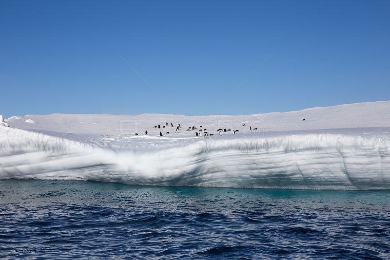 Adelie penguin (Pygoscelis adeliae) on iceberg in front of the Ross Ice Shelf, Ross Island, Ross Sea, Antarctica.