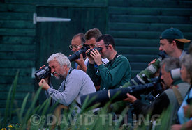 Birders watching and photographing Baillon's Crake at Stodmarsh July 1999 Kent