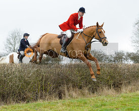 Ashley Bealby jumping a hedge by Puss's Bushes - The Cottesmore at The Fox and Hounds