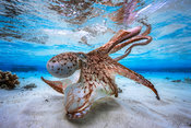 Underwater photography: animals pictures in the underwater world
