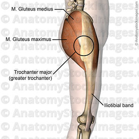 hip-trochanter-major-greater-trochanter-gluteus-maximus-medius-iliotibial-band-side-skin-names