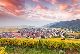Sunrise over autumn vineyards,  Riquewihr, Alsace, France