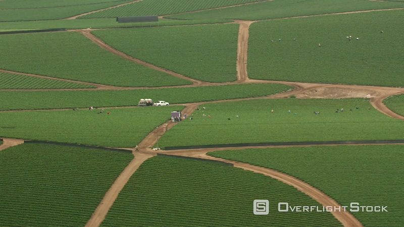 California Aerial shot of workers picking vegetables on farm.  Shot with Cineflex and RED EpicW Helium.