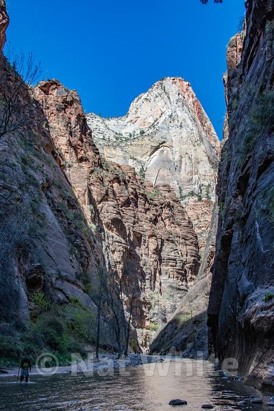 Zion_National_Park--Zion_NP_-388April_18_2018-April_18_2018-