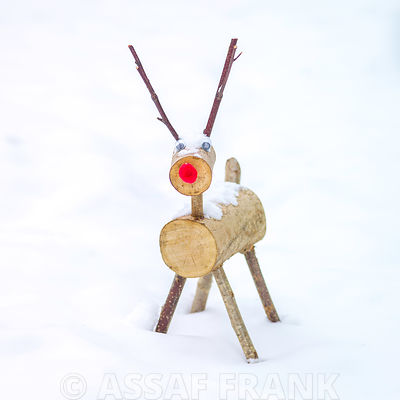 Reindeer photos