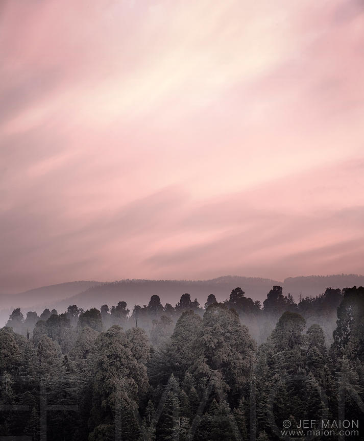 Pink sunrise over forest