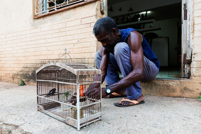 Man Tending his Pet Bird
