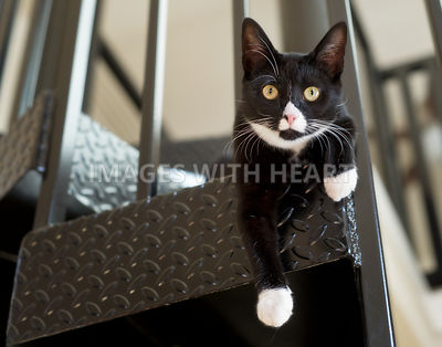 Cat on a spiral staircase