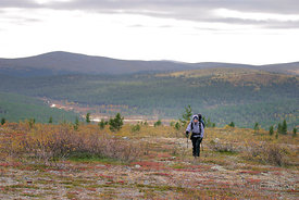 Hiker on a background of taiga and hills