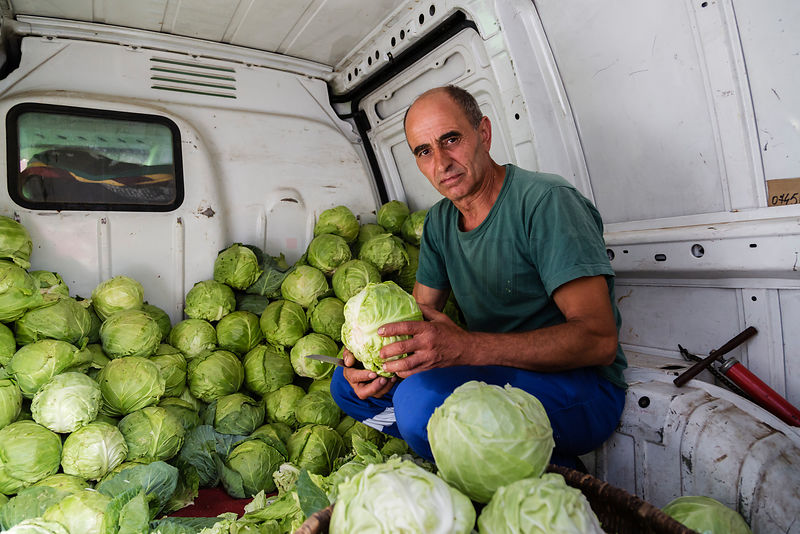 Farmer Peeling Cabbages in the back of his Truck