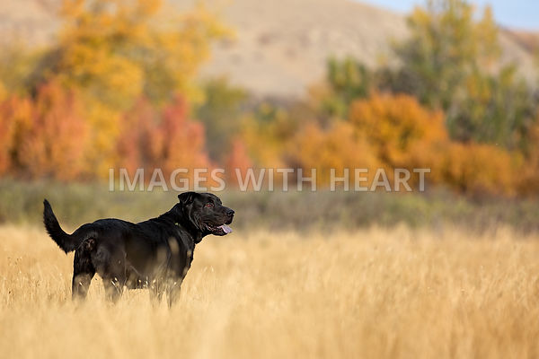 DOGS: OUTDOORS photos