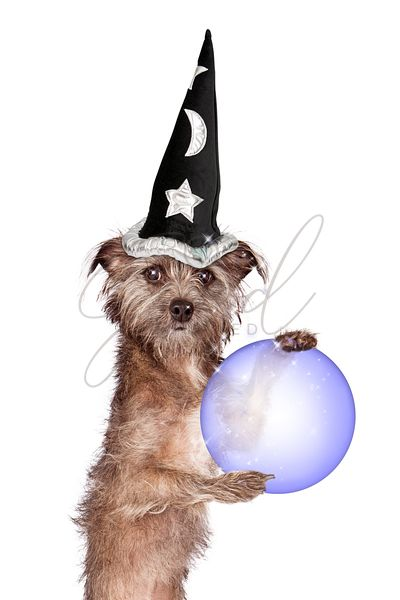 Terrier Dog Fortune Teller