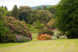 View through rhododendrons to Round Pond Garden