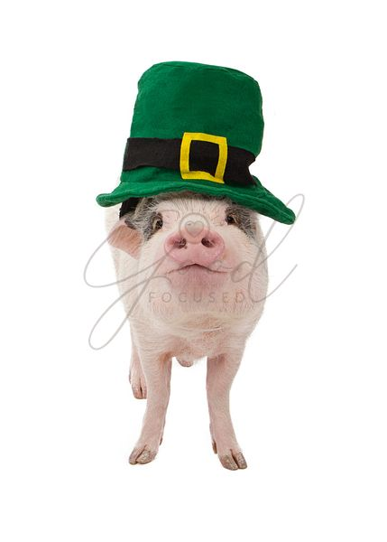 Pig Wearing St. Patricks Day Hat