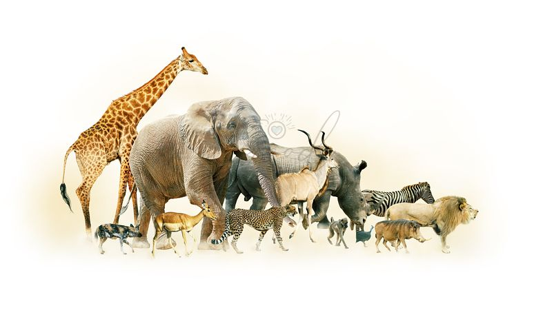 Safari Animals Walking Side Horizontal Banner