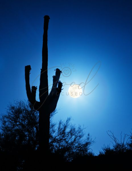 Super Full Moon With Saguaro Cactus in Phoenix Arizona