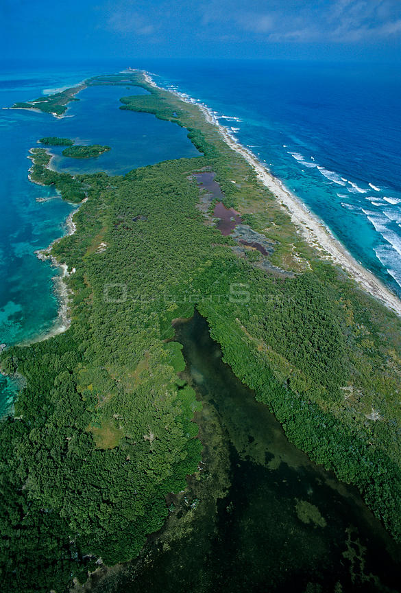 Aerial view of Red mangrove (Rhizophora mangle) forest, Contoy Island National Park, Mesoamerican Reef System, near Cancun, Caribbean Sea, Mexico, January