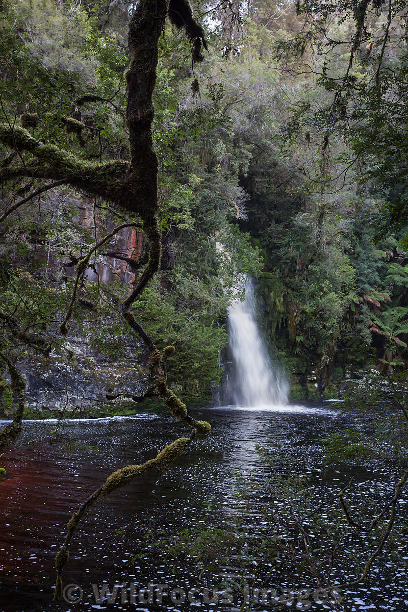 Sir John Falls, Franklin - Gordon Wild Rivers National Park, Tasmania, Australia; Portrait