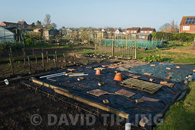 Allotments in Holt North Norfolk