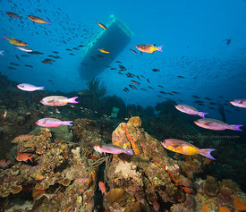 Schooling fish and diveboat at Buddy Reef, Bonaire, Netherland Antillies