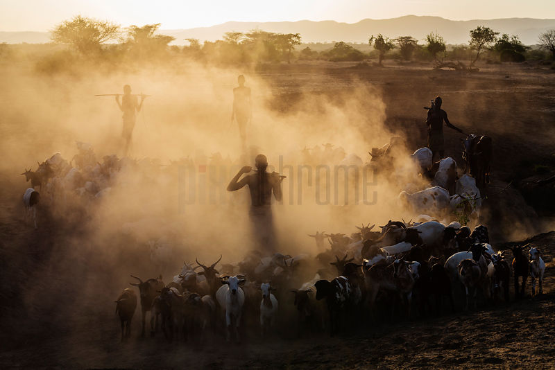 Kara Cattle Herders