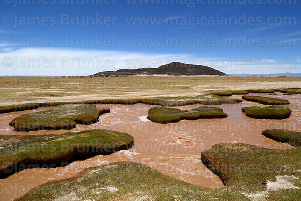 Cold water springs in altiplano at Polloqueri, near Pampa Aullagas, Oruro Department, Bolivia