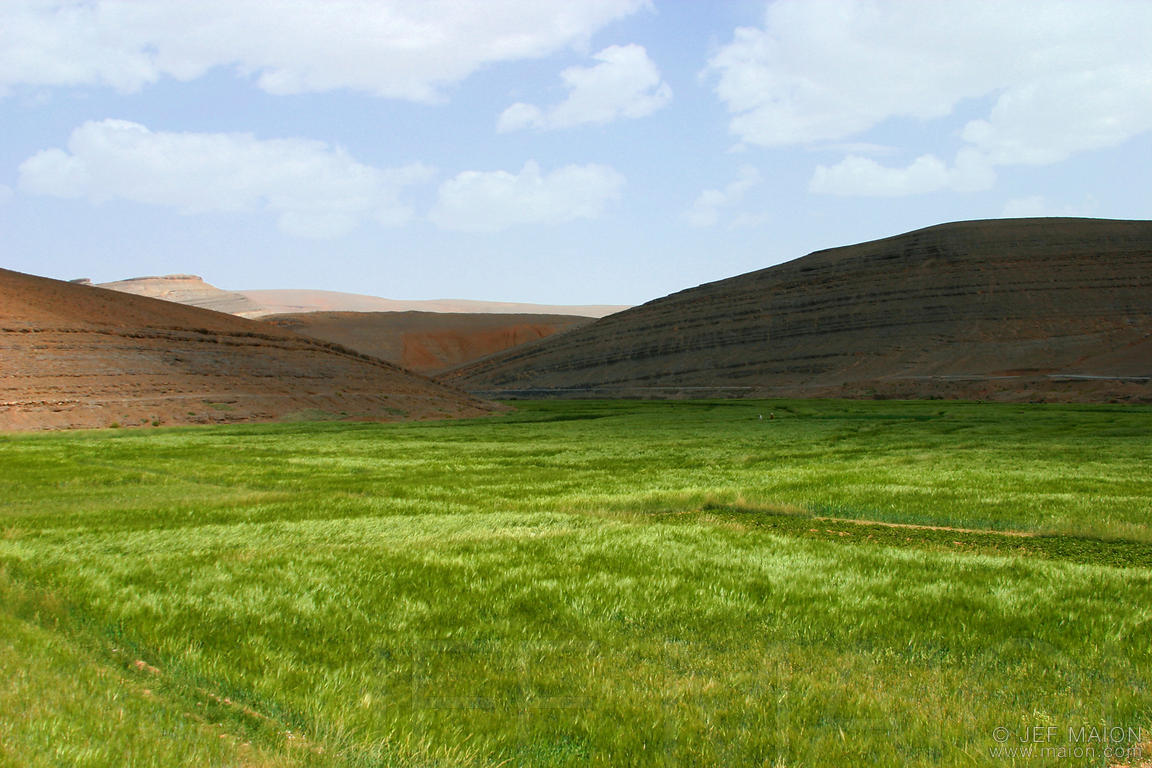 Field amidst desert mountains