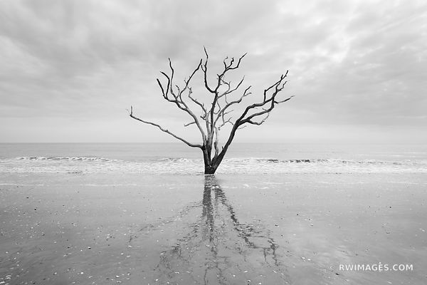 BONEYARD BEACH BOTANY BAY EDISTO ISLAND SOUTH CAROLINA BLACK AND WHITE