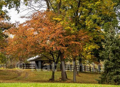 Fall_color_at_Canyon_Farm-9446_October_08_2017_