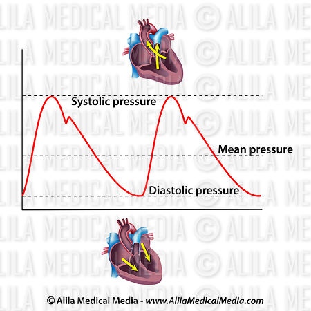 Systolic  and diastolic blood pressures