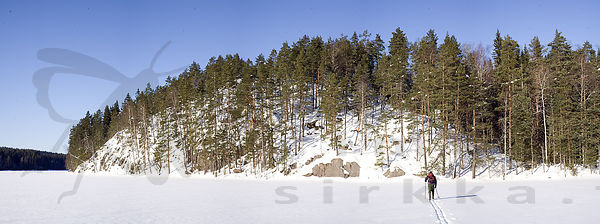 Skier in Isojärvi National Park