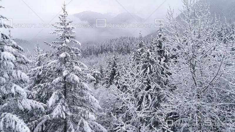 Rising Aerial on Frozen Winter Landscape of Foggy Snow. Index Washington USA