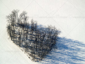 A cropping of trees resembles a heart in winter in rural Souther