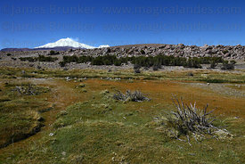 Scenery in Las Vicuñas National Reserve , Guallatiri volcano in background ,Region XV , Chile