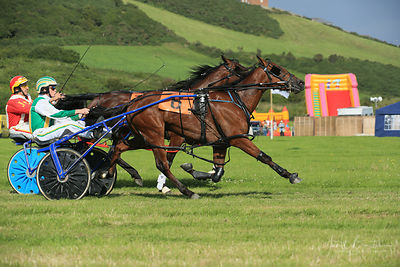 CEREDIGION EVENTS photos