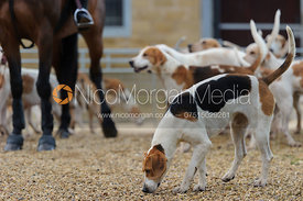 A hound with the Cottesmore Hunt in Ashwell