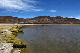 Lake Arabilla, Isluga National Park , Region I , Chile