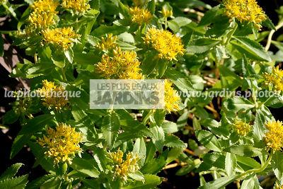 la photothèque | LES PLUS BEAUX JARDINS | Plante De Rocaille | le ...