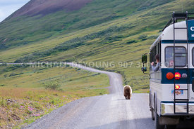 Alaska Travel - Denali National Park