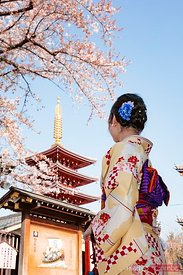 Japanese woman looking at pagoda and cherry blossom