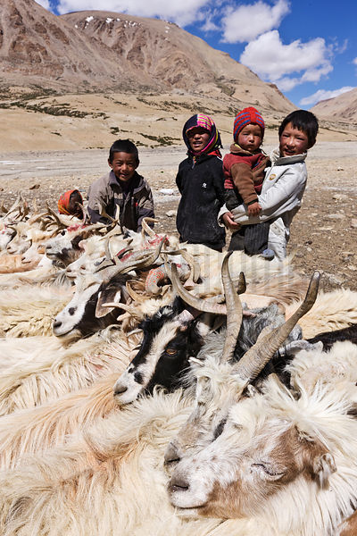 Nomadic Children and Pashmina Goats