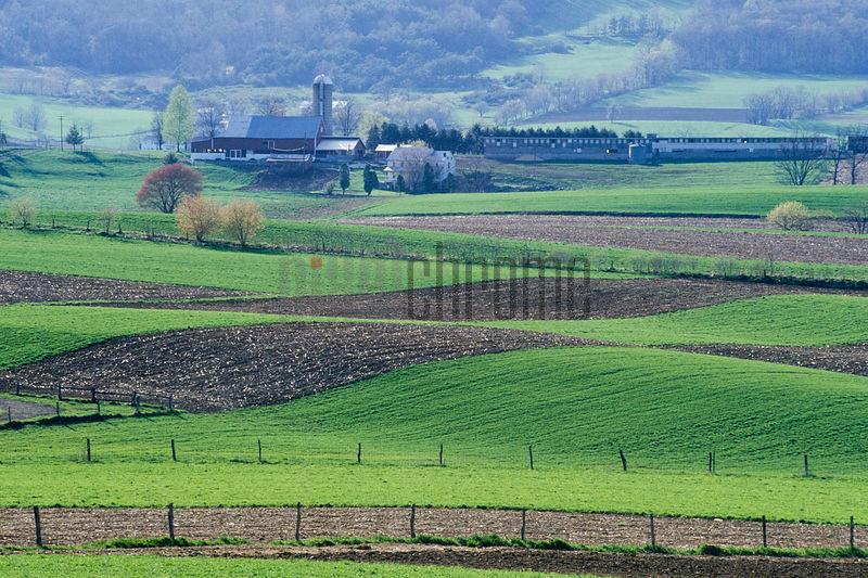 Amish Farmhouse and Farmland