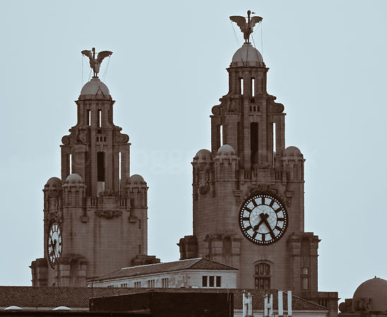 The Rise of the Liver Birds