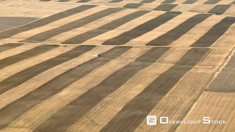 The contrasting stripes of a dormant wheat field in southern Montana